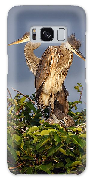 Trio Of Blue Heron Chicks Galaxy Case