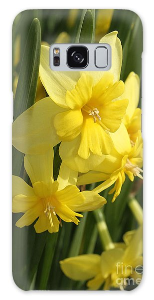 Tripartite Daffodil Galaxy Case by Judy Whitton