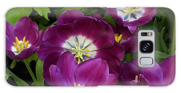 Triumph Tulips Negrita Variety Galaxy Case