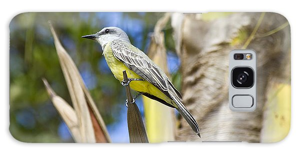 Tropical Kingbird Galaxy Case by Teresa Zieba