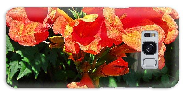 Trumpet Flower Orange Quartet Galaxy Case