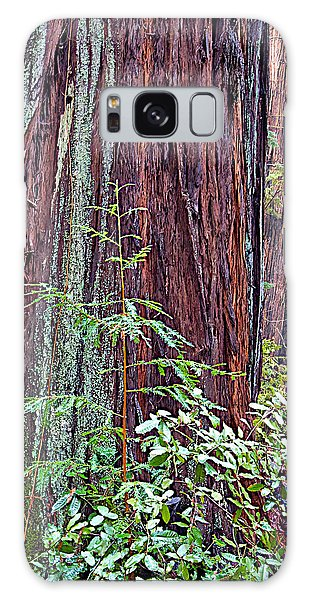 Trunk Of Coastal Redwood In Armstrong Redwoods State Preserve Near Guerneville-ca Galaxy Case
