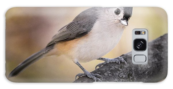 Tufted Titmouse Galaxy Case by Bill Wakeley