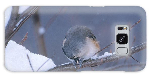 Tufted Titmouse Eating Seeds Galaxy Case by Paul J. Fusco