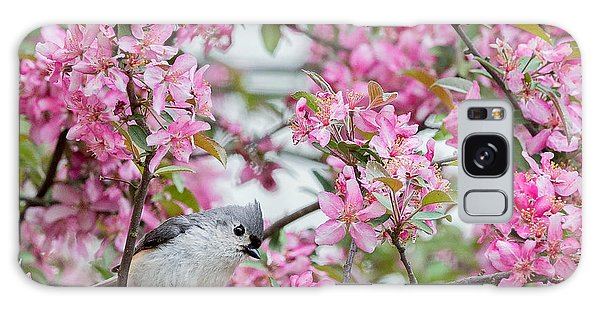 Tufted Titmouse In A Pear Tree Square Galaxy Case