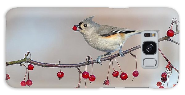 Tufted Titmouse With Red Berry Galaxy Case