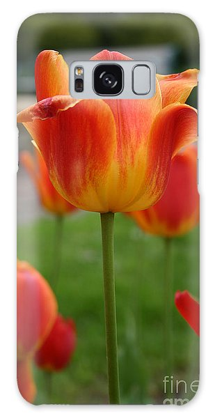 Tulip Collection Photo 1 Galaxy Case