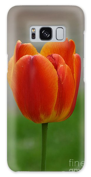 Tulip Collection Photo 8 Galaxy Case