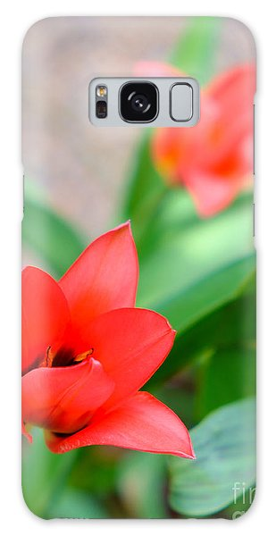 Tulip Of Dream Galaxy Case