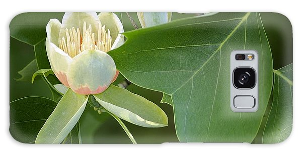 Tulip Tree Galaxy Case