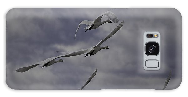 Tundra Swans Taking Flight 1 Galaxy Case