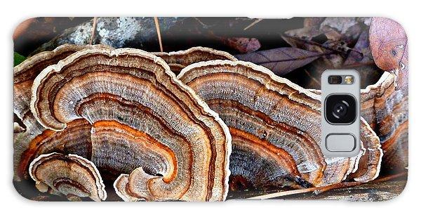 Turkey Tail Fungi In Autumn Galaxy Case by William Tanneberger