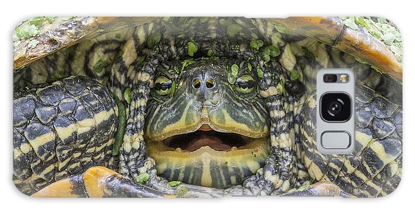 Turtle Covered With Duckweed Galaxy Case