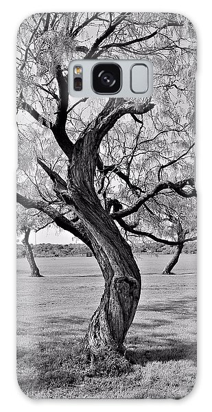 Twisted Tree Galaxy Case