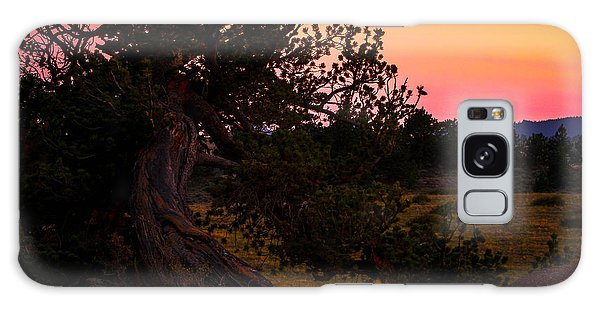 Twisted Tree In Sunset Galaxy Case