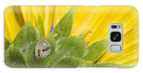 Two Ants Entombed In Sunflower Resin Galaxy Case