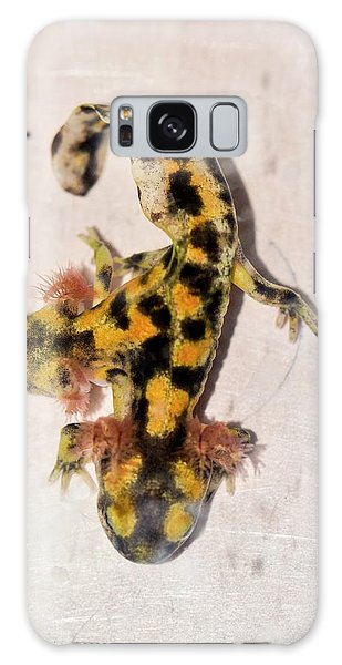 Salamanders Galaxy Case - Two-headed Fire Salamander by Photostock-israel