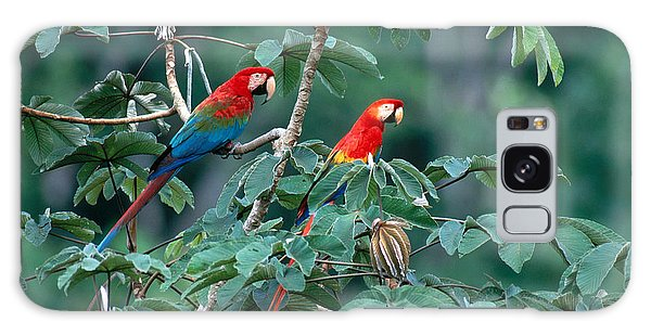 Macaw Galaxy Case - Two Macaws by Art Wolfe