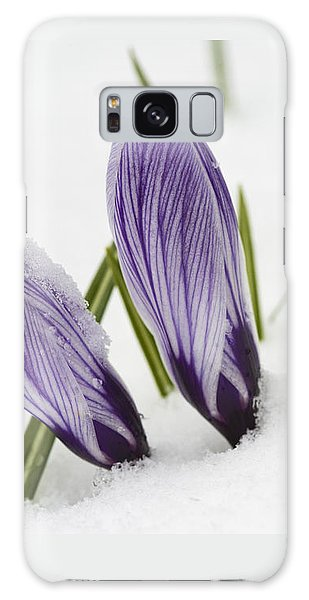 Two Purple Crocuses In Spring With Snow Galaxy Case