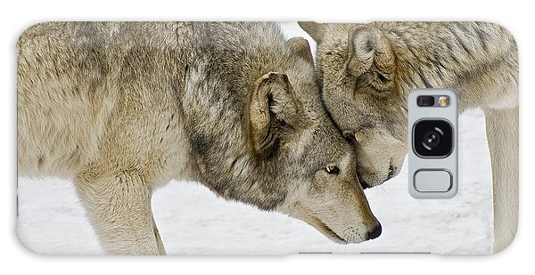 Two Wolves In  A Staredown Galaxy Case