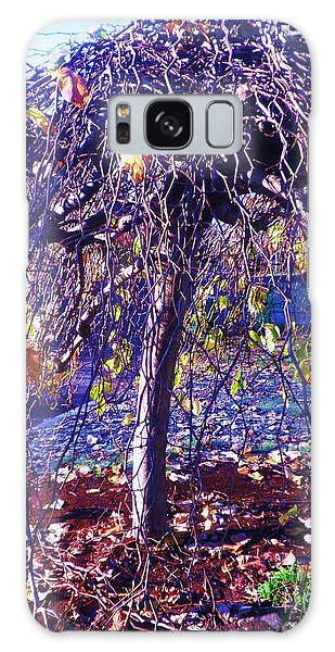 Umbrella Tree In Fall Galaxy Case by Suzanne McKay