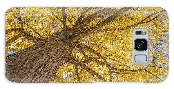Under The Autumn Tree Galaxy Case