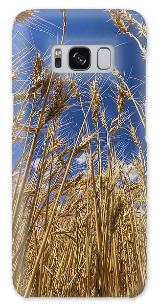 Under The Wheat Galaxy Case
