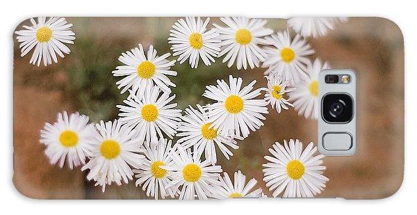 Unidentified Daisy Galaxy Case