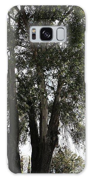 Up-view Of Oak Tree Galaxy Case