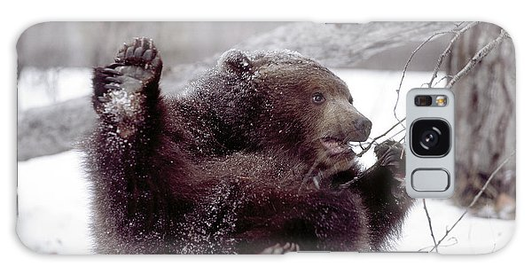 Grizzly Bears Galaxy Case - Usa, Alaska Juvenile Grizzly Plays by Jaynes Gallery