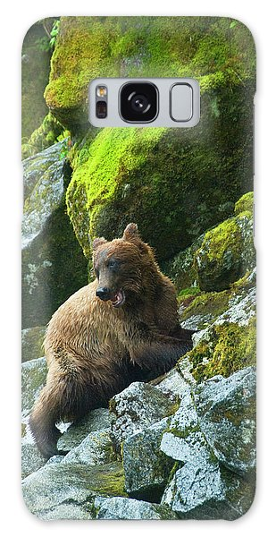 Grizzly Bears Galaxy Case - Usa, Alaska Young Grizzly Bear On Rocky by Jaynes Gallery