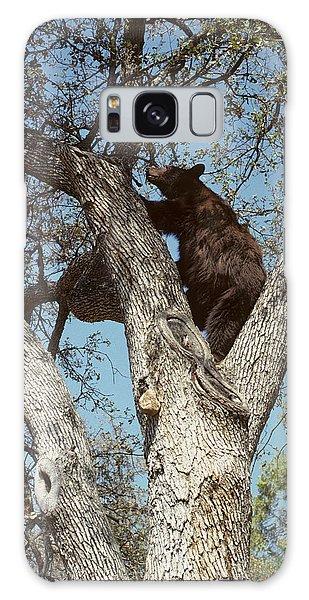 Kings Canyon Galaxy Case - Usa, California, Black Bear In Oak by Gerry Reynolds
