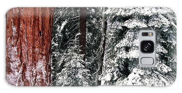 Cold Day Galaxy Case - Usa, California, Sequoia National Park by Inger Hogstrom