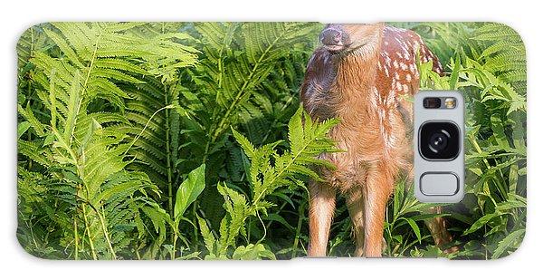 White-tailed Deer Galaxy Case - Usa, Minnesota, Sandstone, Minnesota by Jaynes Gallery