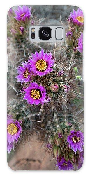 Desert Flora Galaxy Case - Usa, Utah Whipples Fishook Cactus by Judith Zimmerman