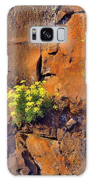 Basalt Galaxy Case - Usa, Washington Lomatium Flowers by Jaynes Gallery