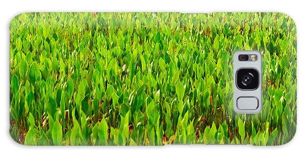 Boynton Galaxy S8 Case - Vegetation, Boynton Beach, Florida, Usa by Panoramic Images
