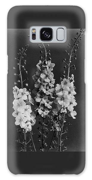 Verbascum Phoeniceum Flowers Galaxy Case