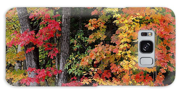 Vermont October Woods Galaxy Case by Alan L Graham