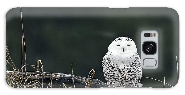Vermont Snowy Owl Galaxy Case