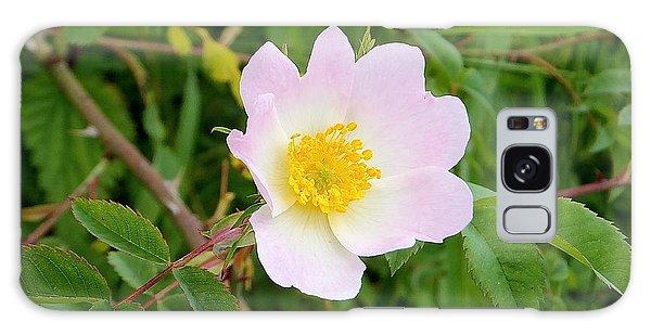 Vert Jaune Rose Galaxy Case