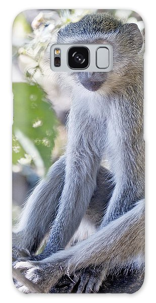 Vervet Monkey Galaxy Case