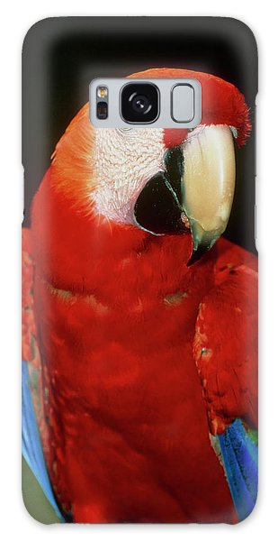 Macaw Galaxy Case - View Of A Scarlet Macaw (ara Macao) by William Ervin/science Photo Library