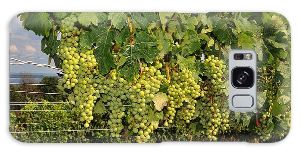 Green Grapes In Traverse City Michigan Galaxy Case by Diane Lent