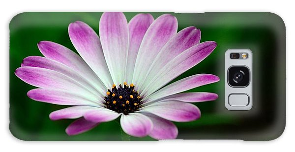 Violet And White Flower Petals With Yellow Stamens Blossoms  Galaxy Case