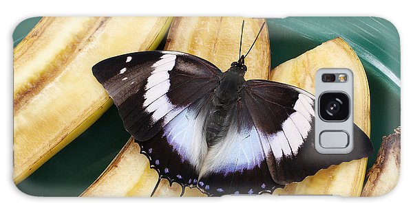 Violet-spotted Charaxes Butterfly Galaxy Case