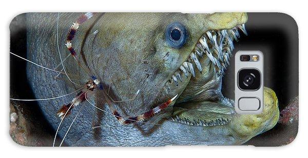 Viper Galaxy Case - Viper Moray And Boxer Shrimp by C?dric P?neau