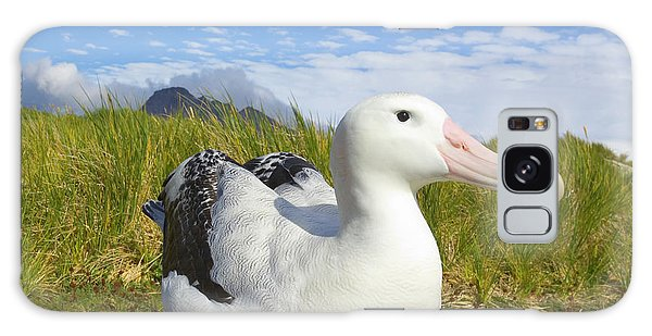 Albatross Galaxy Case - Wandering Albatross Incubating  by Yva Momatiuk John Eastcott