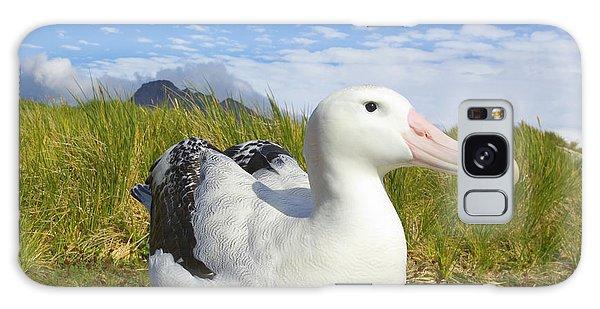 Wandering Albatross Incubating  Galaxy Case