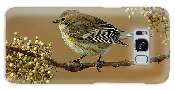 Yellow Rumped Warbler Galaxy S8 Case